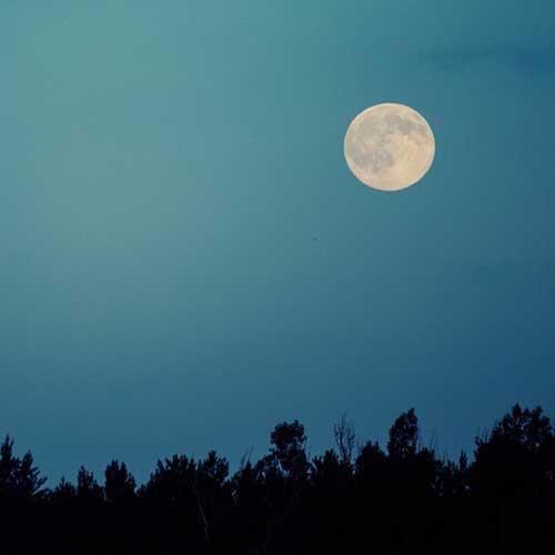full moon over trees